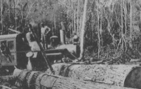 Mengel C  C   am...R C Moore Lumber Company